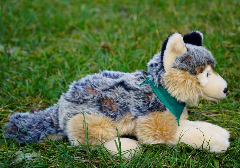 Wolf von der Seite mit Tuch