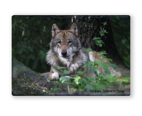 Magnet Wolf